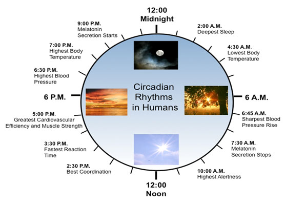 circadian rhythm Useful patient information on circadian rhythms sleep disorders ucla sleep disorders center.